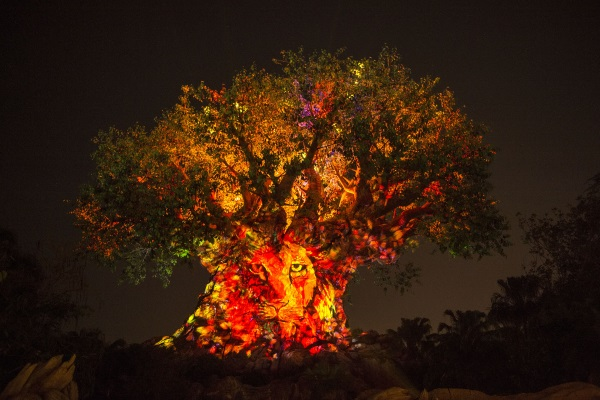 El Arbol de la Vida ilumina Animal Kingdom en las noches. Foto Walt Disney World.